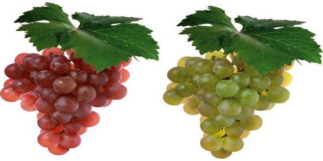 Wiki Juices - Red and white grapes