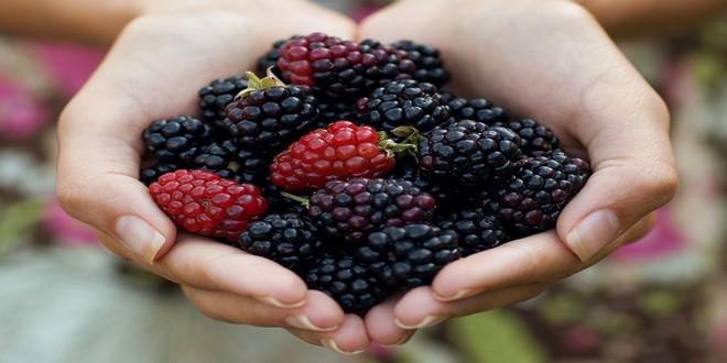 Wiki Juices - Blackberry hands