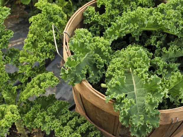 Wiki Juices - Basket with Kale