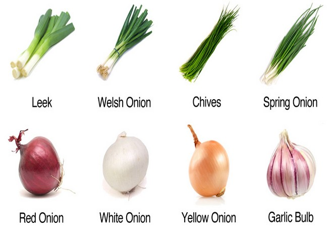 Onion Leek Garlic